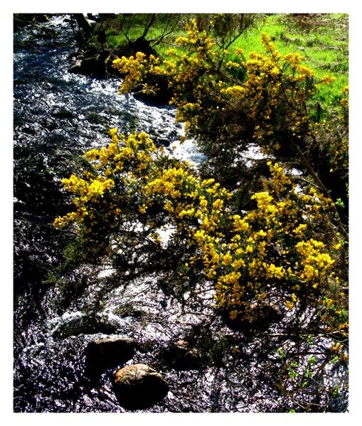 A Splash of Yellow by shawpaul