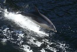 Doubtful Dolphin