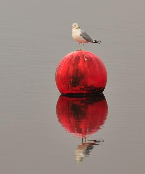 Bird on a Buoy by billmac57