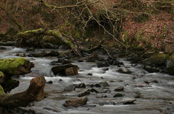 River Taff by RobbieWales