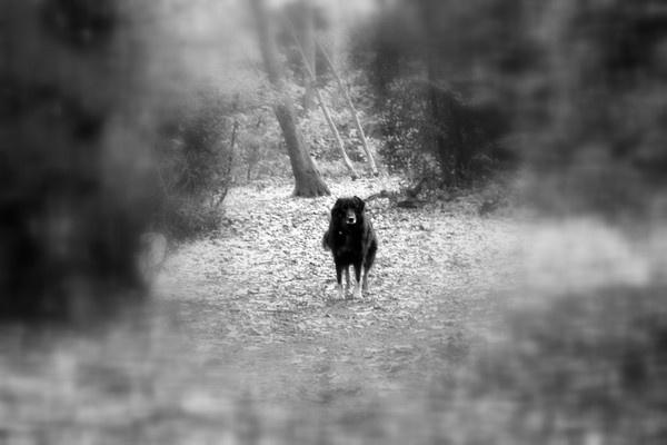 Dog by Manni1996