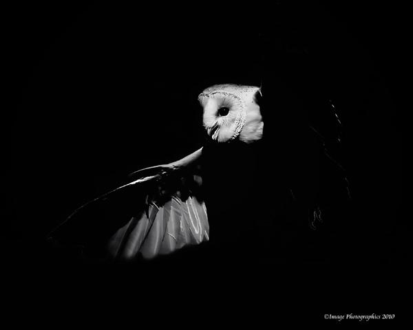 NIGHT FLIGHT by Imagephotographics