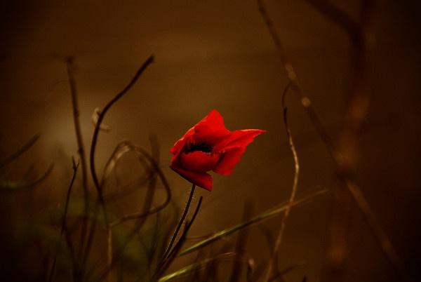 red soul by vasile_covaciu