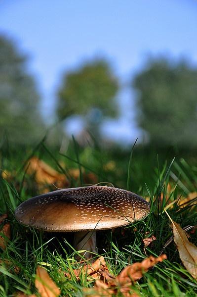 fungi by wisp