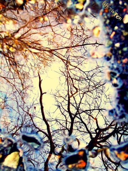 Golden Reflection... by LilyWren
