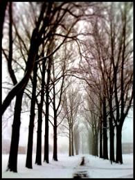 2010-02 Winter avenue