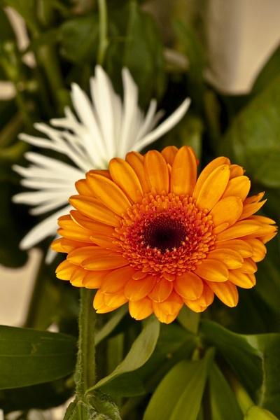 Orange Flower Closeup by touchingportraits