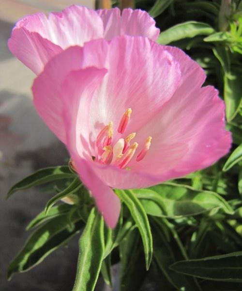 THE FLOWER by queengu21