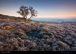 Frost on the Moor