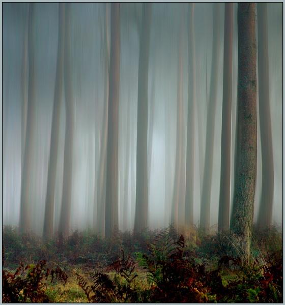 A November Morning by MalcolmM