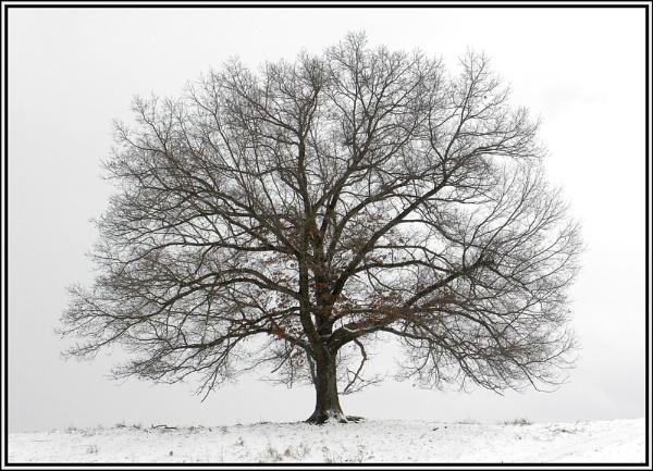 A  WINTER  TREE . . . by PattiW