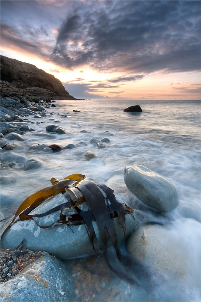 Seaweed At Osmington Mill by blackforce
