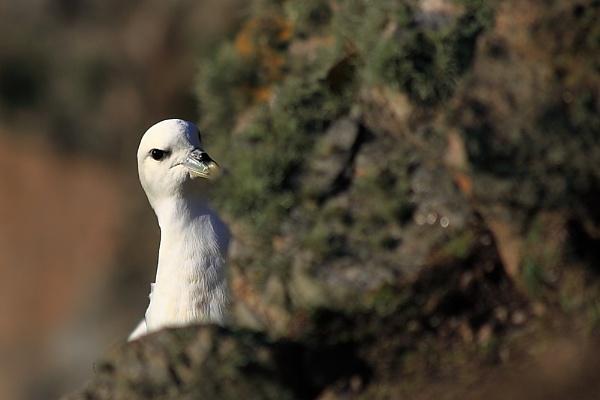 nesting by ireid7