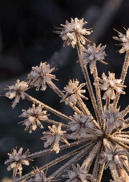 Frozen by RosePhoto