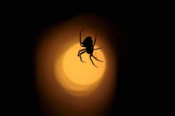 Night Crawler by konu