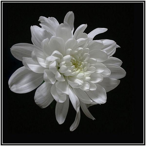 White by maryg