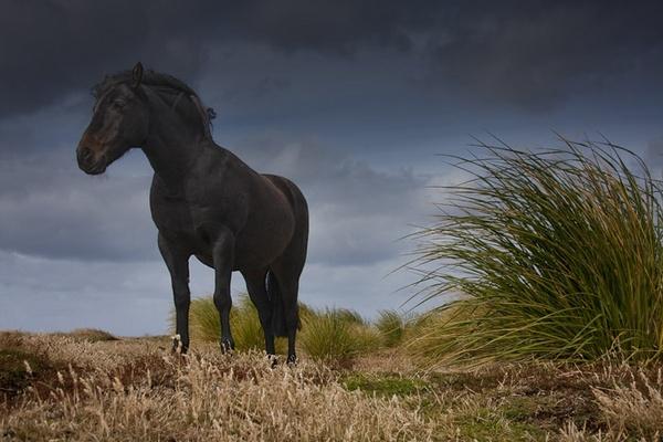 Horse on Sealion Island by Skinnyde