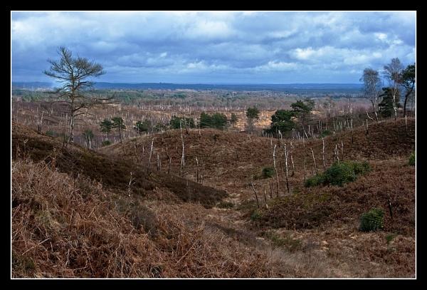Stripped landscape