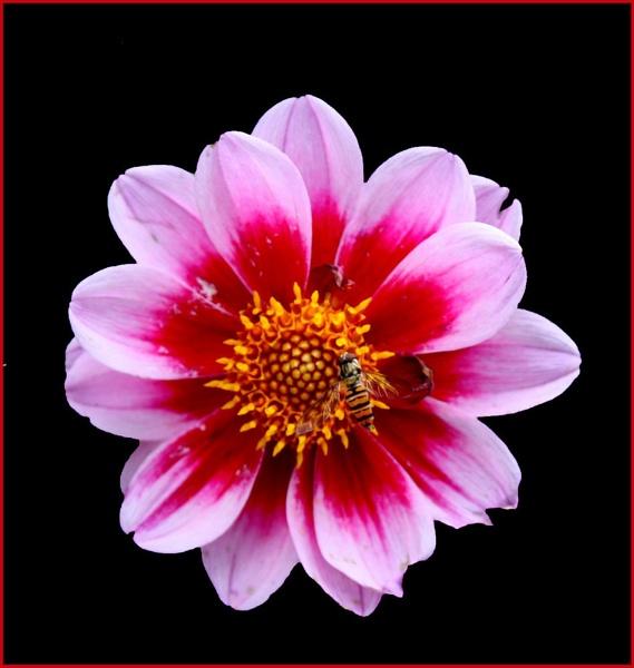 FLOWER by JOKEN