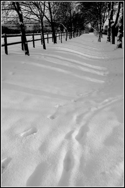 B&W Snow Scene by Beijing_Rich
