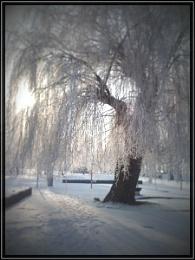 2010-02 last winter tree pic