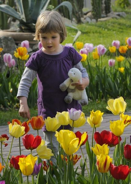 Spring flower by ironoctav