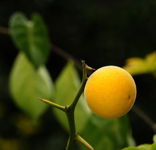 Fruit by ironoctav