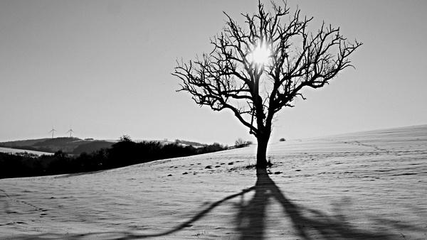Tree in the Snow by mlseawell