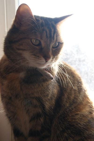 cat by LaurenRyanne