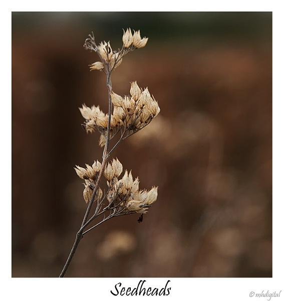 Seedheads by markharrop