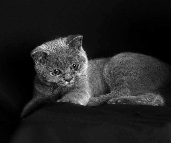 Tilly by teddy