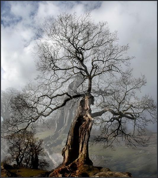 Tree Spirits by TelStar