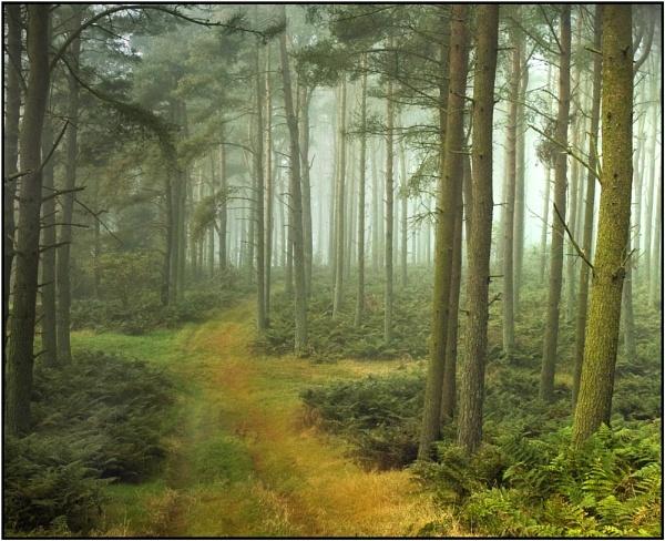 Crossroads... by MalcolmM