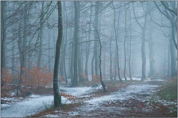 Mist by MalcolmM