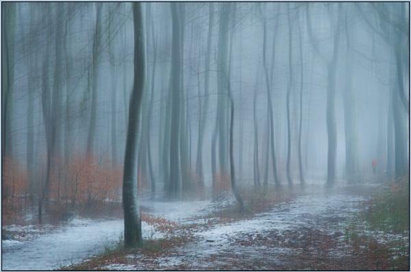 Morning Walk by MalcolmM