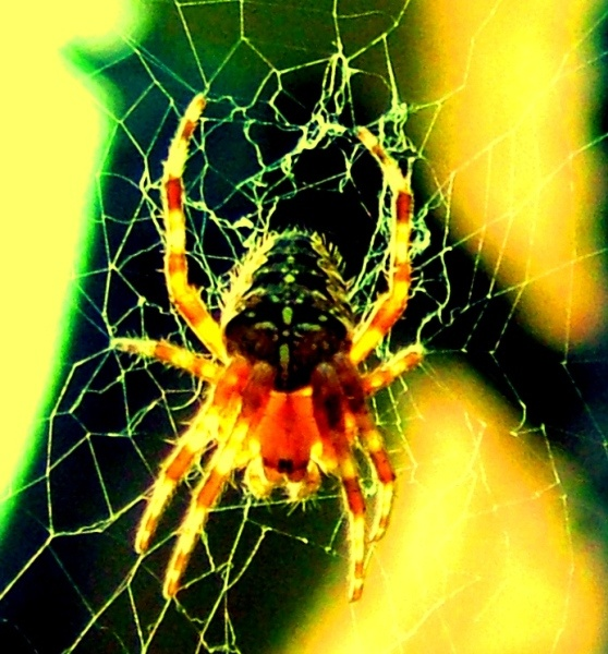Spider by galumphing