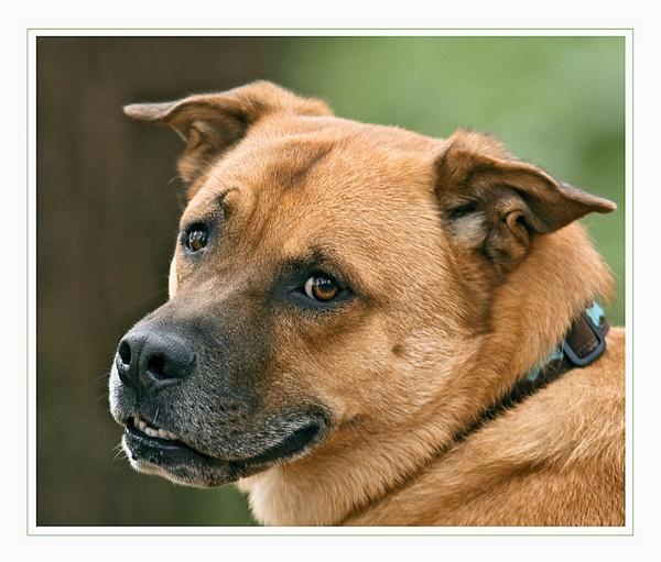 Meet Buddy........ by teocali