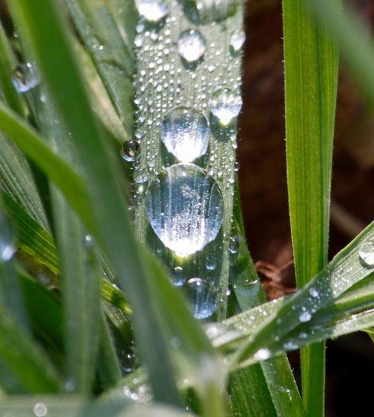 water droplet by HuntedDragon