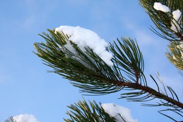 Snowy Branch by benmini