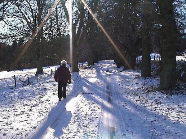 BROWN CLEE IN SNOW by JOKEN