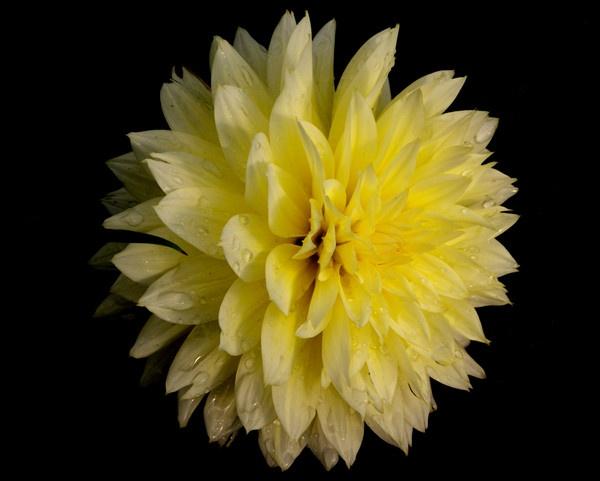 Flower by Manni1996