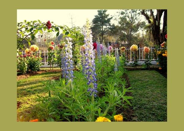 View of a flower garden by nancy_borah