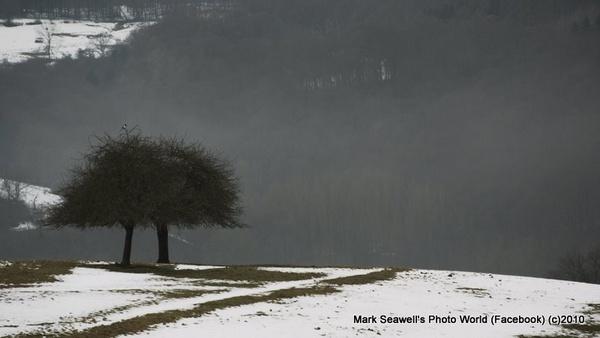 Trees of the field by mlseawell