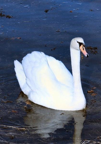 Clean bird.....mucky water!! by braddy