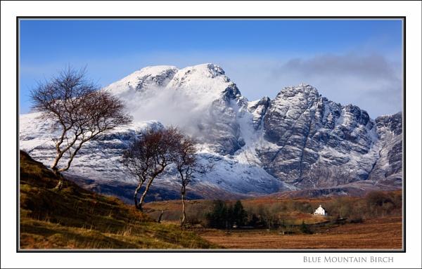 Blue Mountain Birch... by Scottishlandscapes