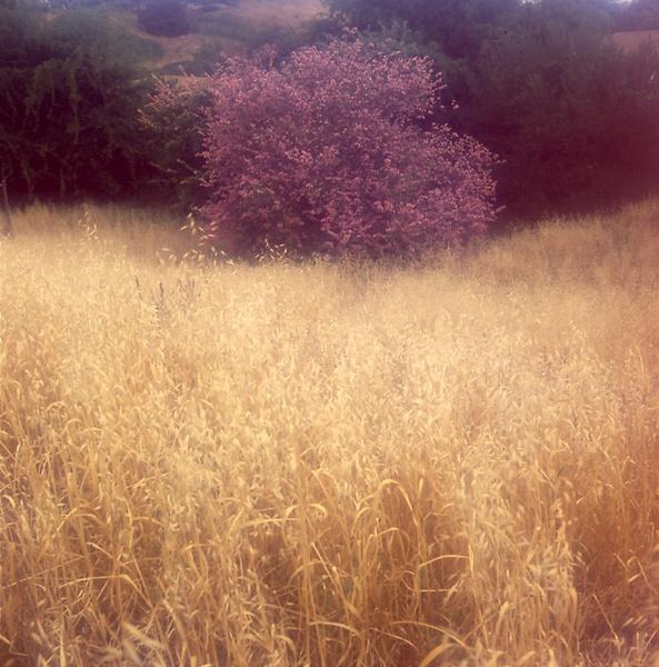 Fall colors by Aldo Panzieri