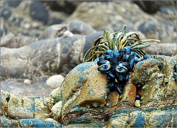Mussel Beach by BlueRoom