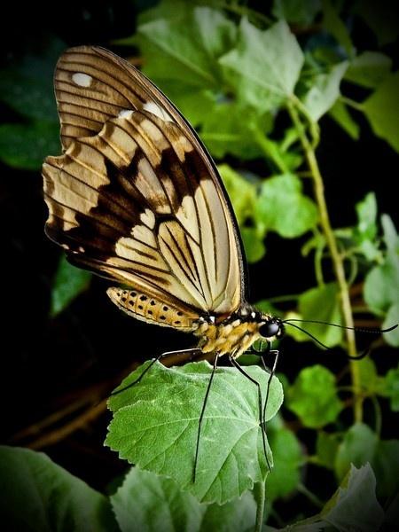 flutter by tony147