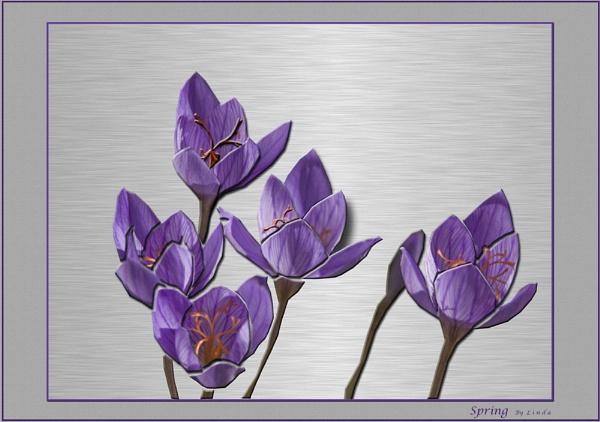 *Spring by Mynett