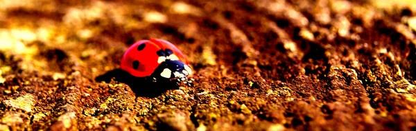 Ladybug by Manni1996
